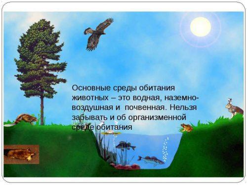 среды обитания животных катринка