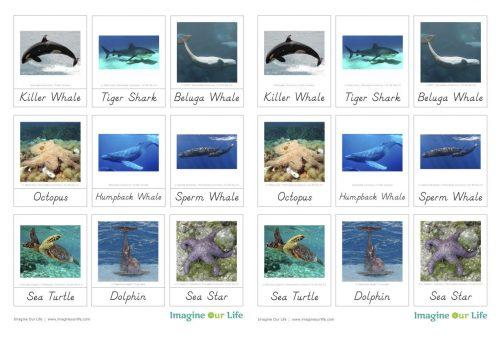 морские животные карточки