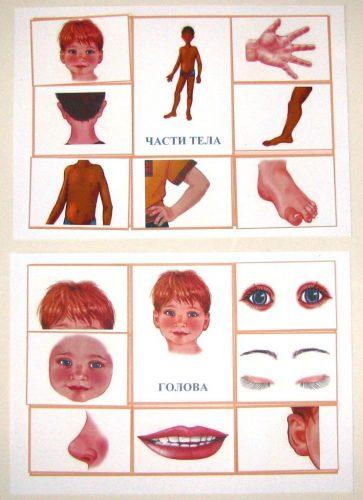 Части тела картинки