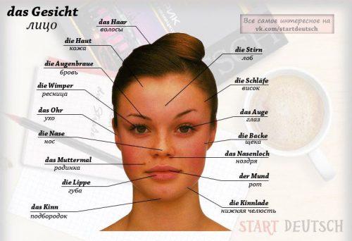 части лица картинка