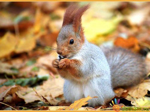 животные осенью картинки для детей