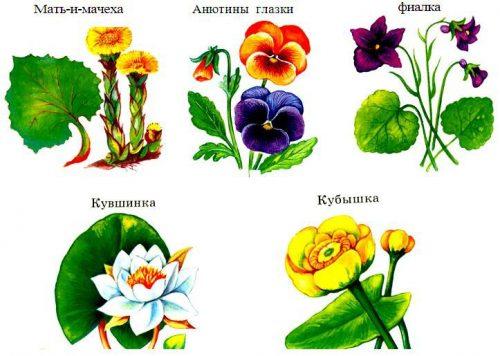 растения картинки для детей
