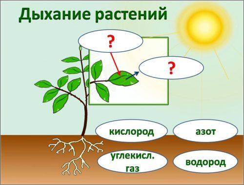 картинки растений для детей
