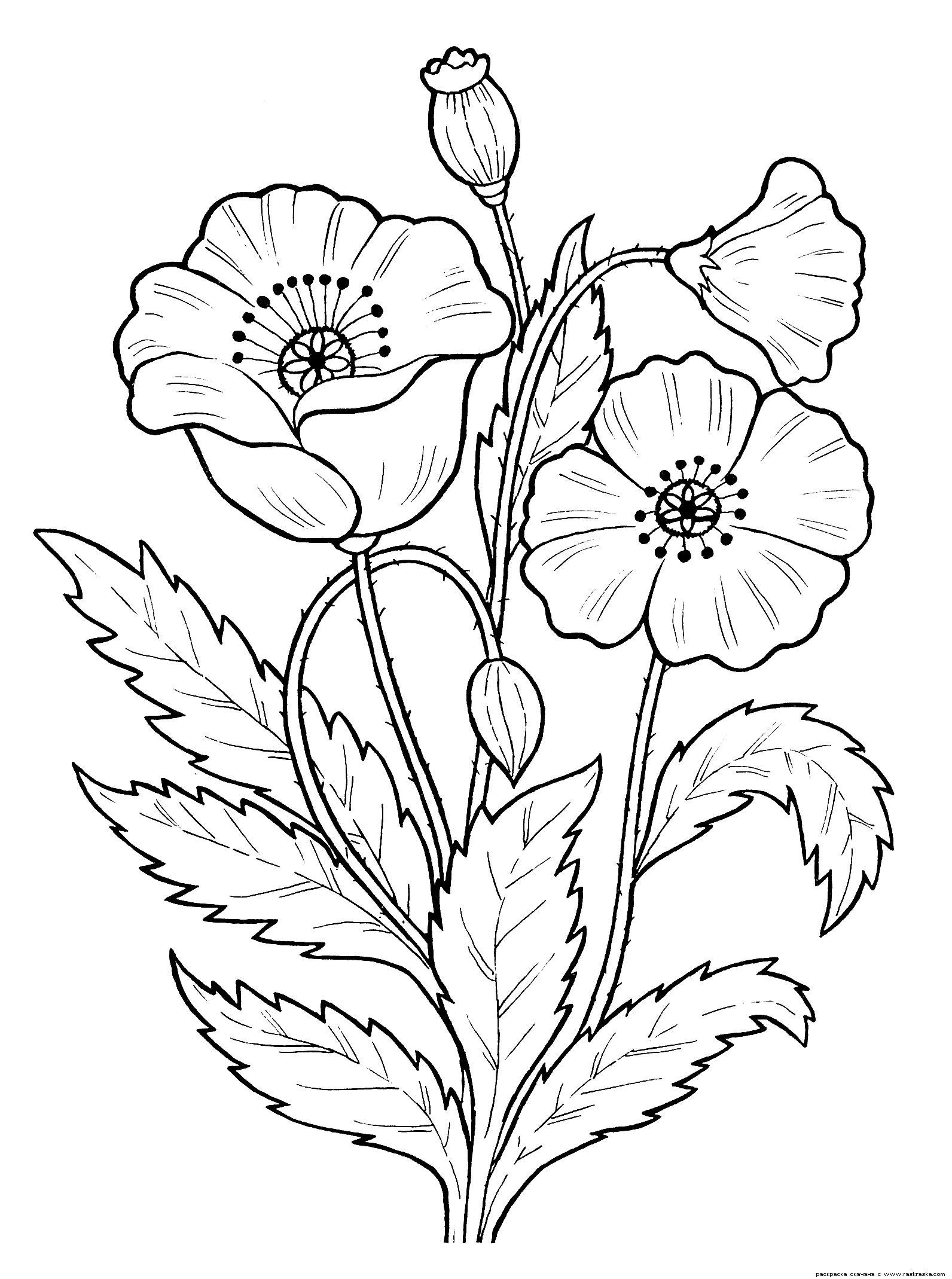 Картинка растений раскраска