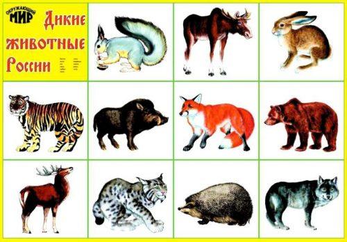 картинки животные россии
