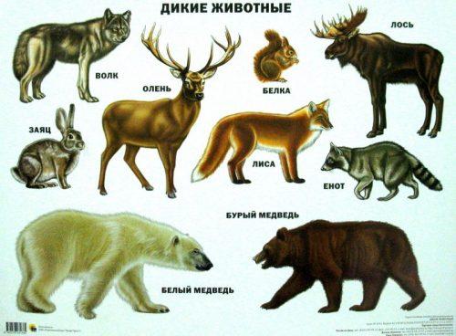 животные севера картинки