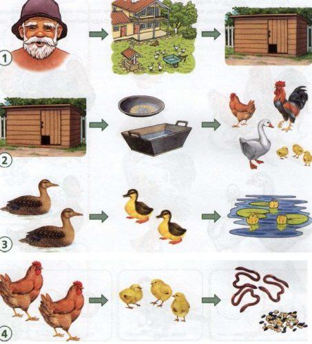 домашние животные картинки