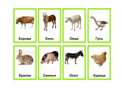 детские картинки животных