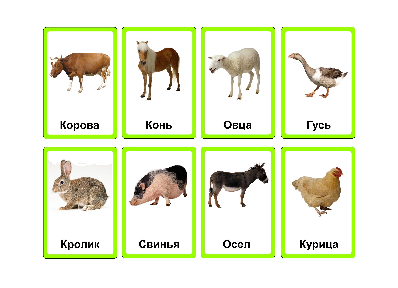 Скачать фото животных домашних бесплатно