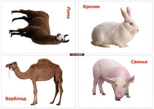 животные картинки
