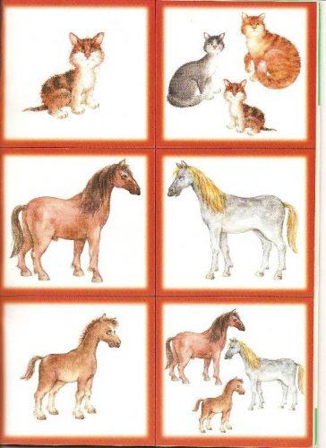животный мир картинки