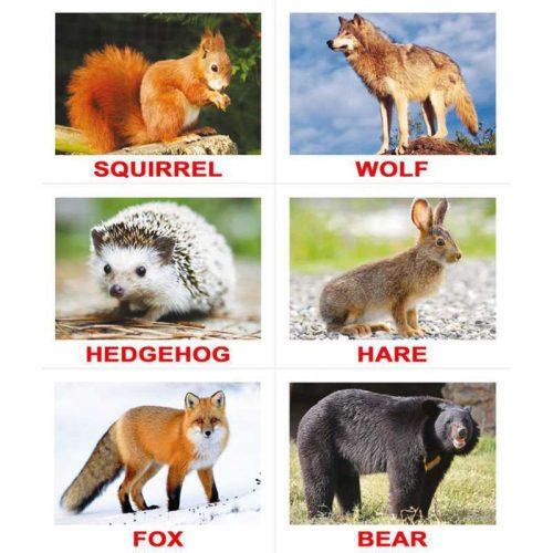 картинки диких животных