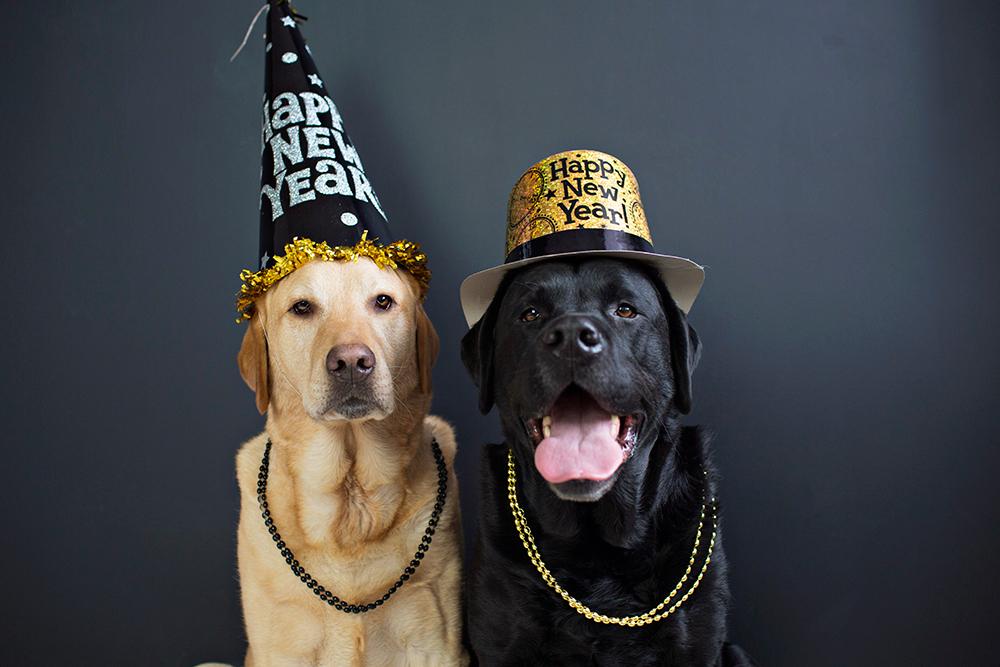 картинки собак на новый год3