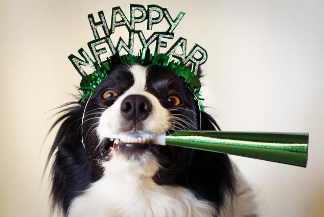 картинки собак на новый год 2018