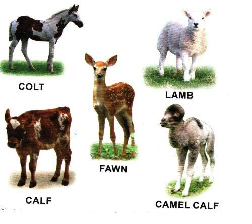 Животные Африки с названиями на английском языке.