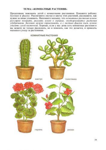 комнатные растения картинки для детей