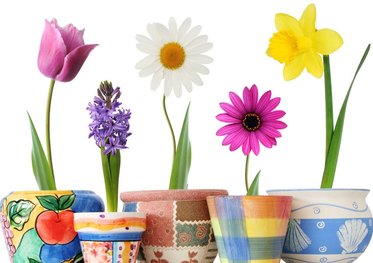 растения картинки для малышей