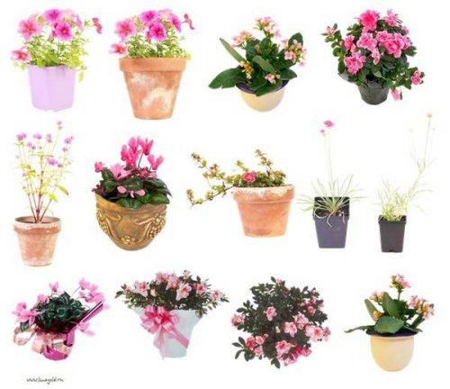 картинки растения комнатные