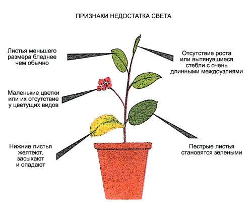 Как понять, что комнатному растению не хватает света?
