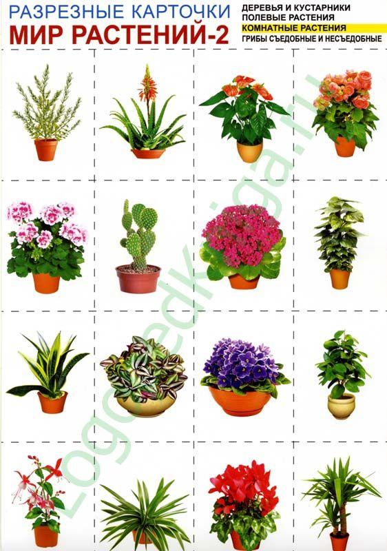 Дошкольникам о комнатных растениях картинки схемы 78