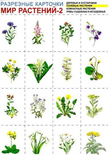 картинки растения