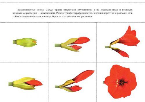 цветок картинки