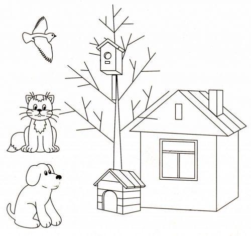 где живут животные