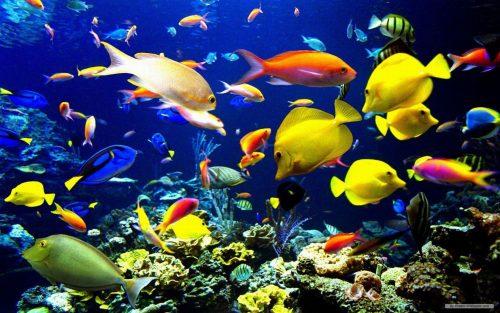 морские обитатели картинки