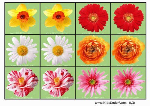 картинки цветы