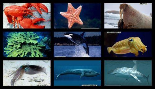 обитатели морских глубин для детей