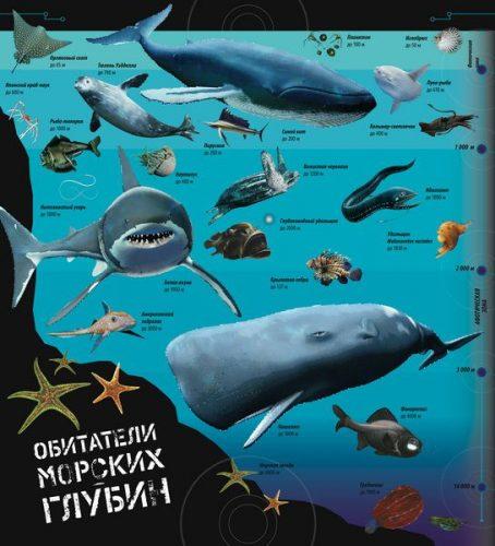 удивительные обитатели морских глубин плакат