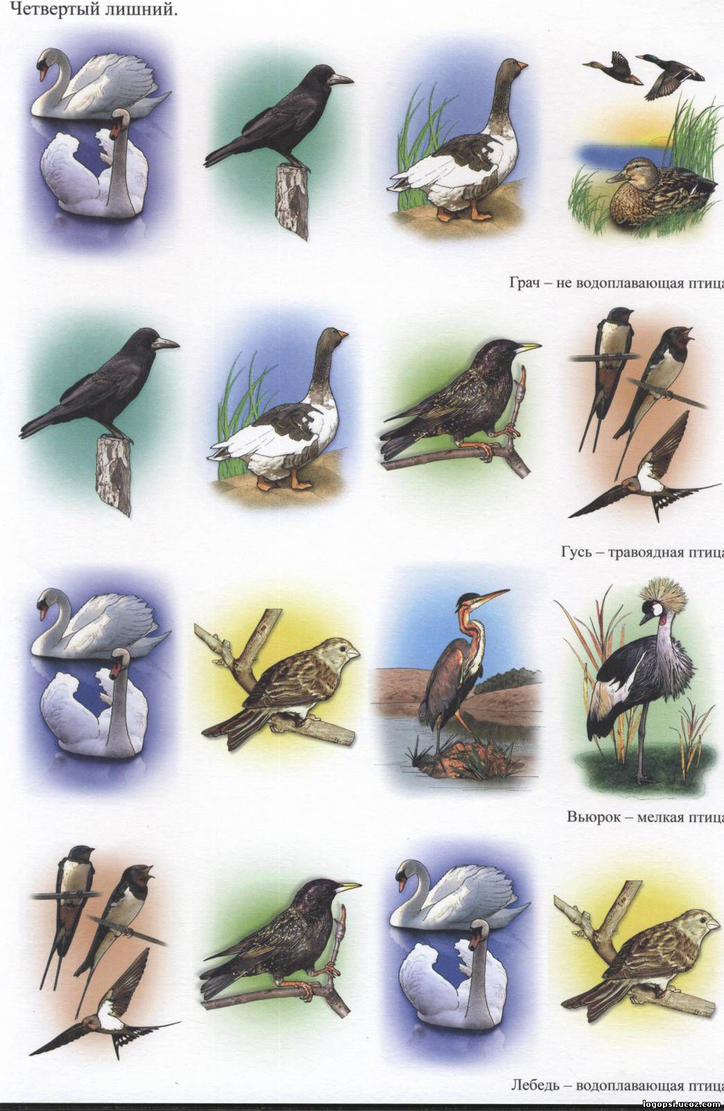Картинки перьев зимующих птиц для детей