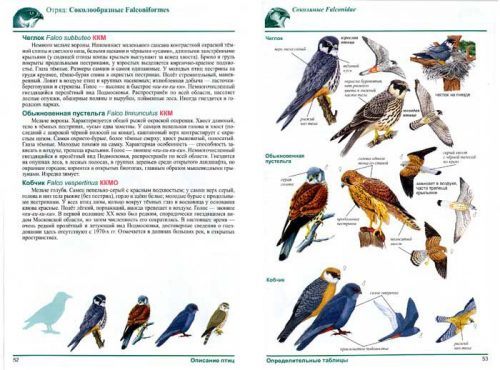 Оседлые птицы картинки