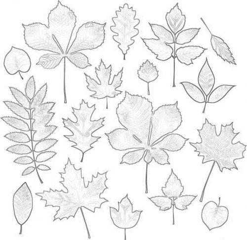 Осень раскраска листья