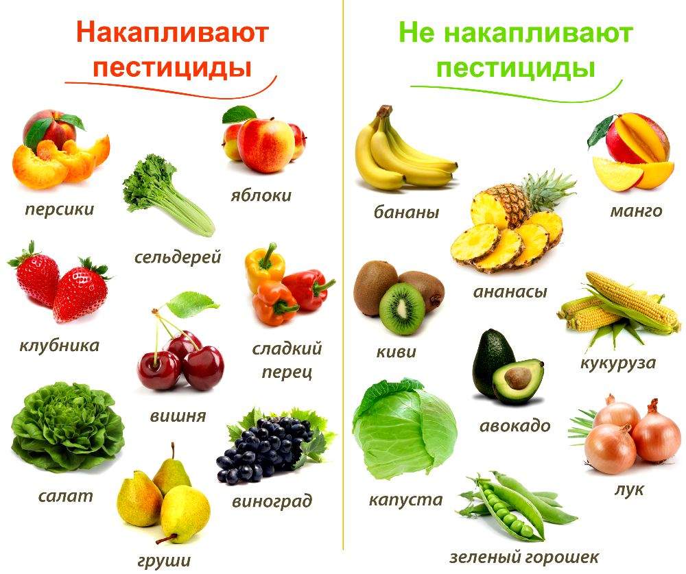 Овощи фото с названиями для детей