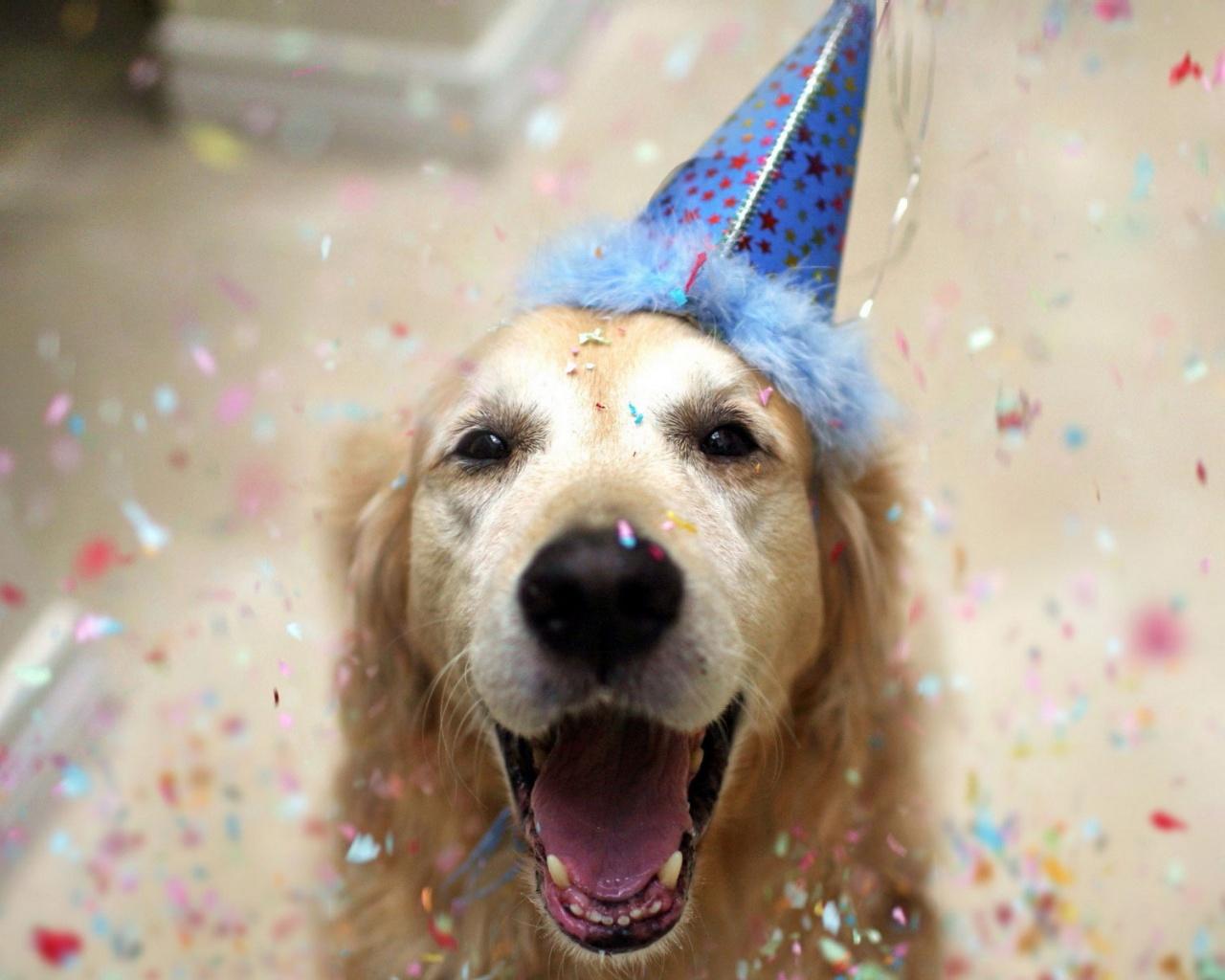 картинки собак на новый год8