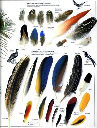 перья птиц картинки