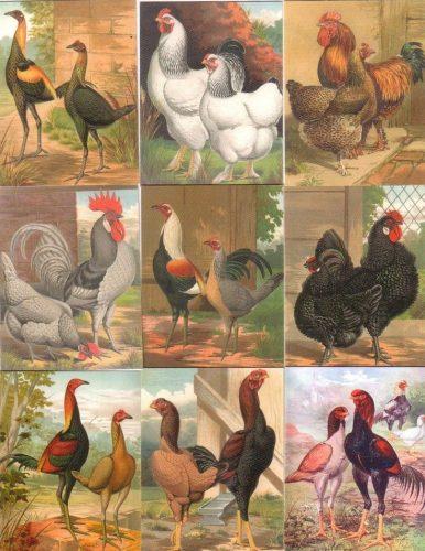красивые птицы картинки