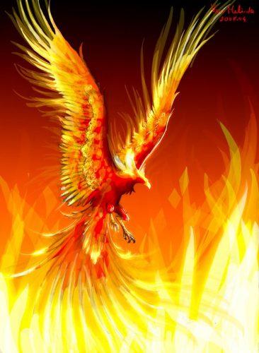 птица феникс картинки