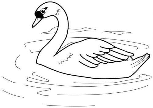 птицы раскраска