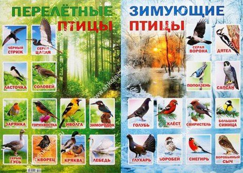пелетные и зимущие птицы