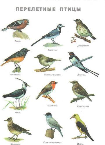дикие и домашние птицы