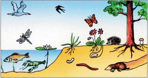 Среда обитания животных картинки