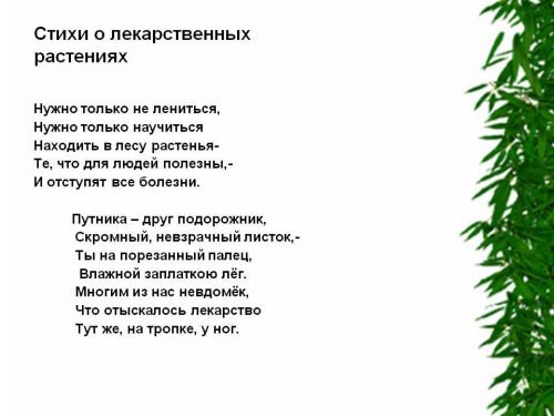 стихи про лекартственные растения