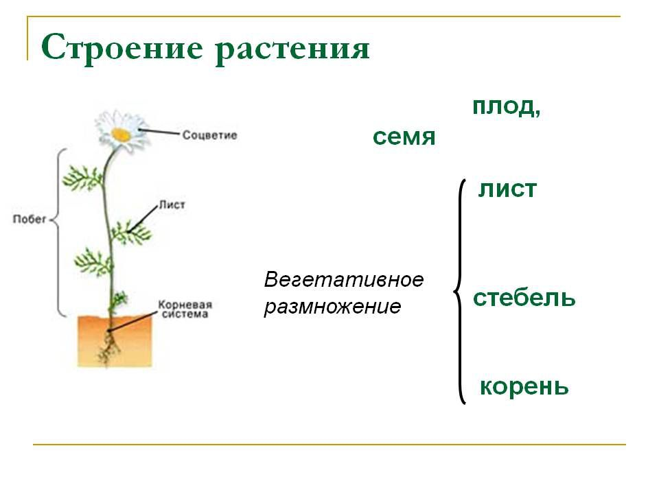 растения схема для детей