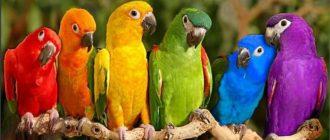 картинки птицы для детей