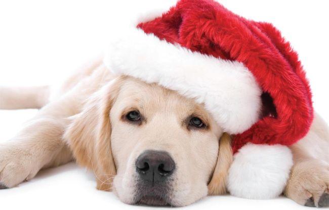новый год собаки картинка2