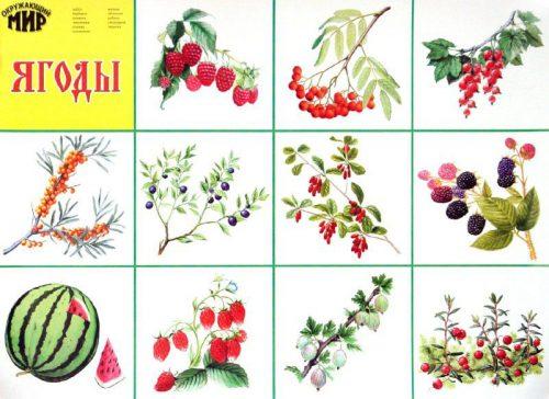 ягоды картинки