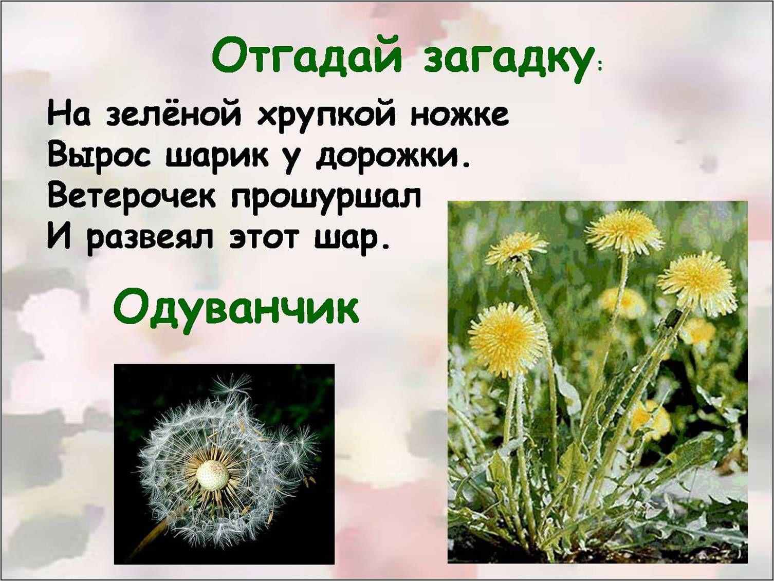 Загадки о растения с картинками