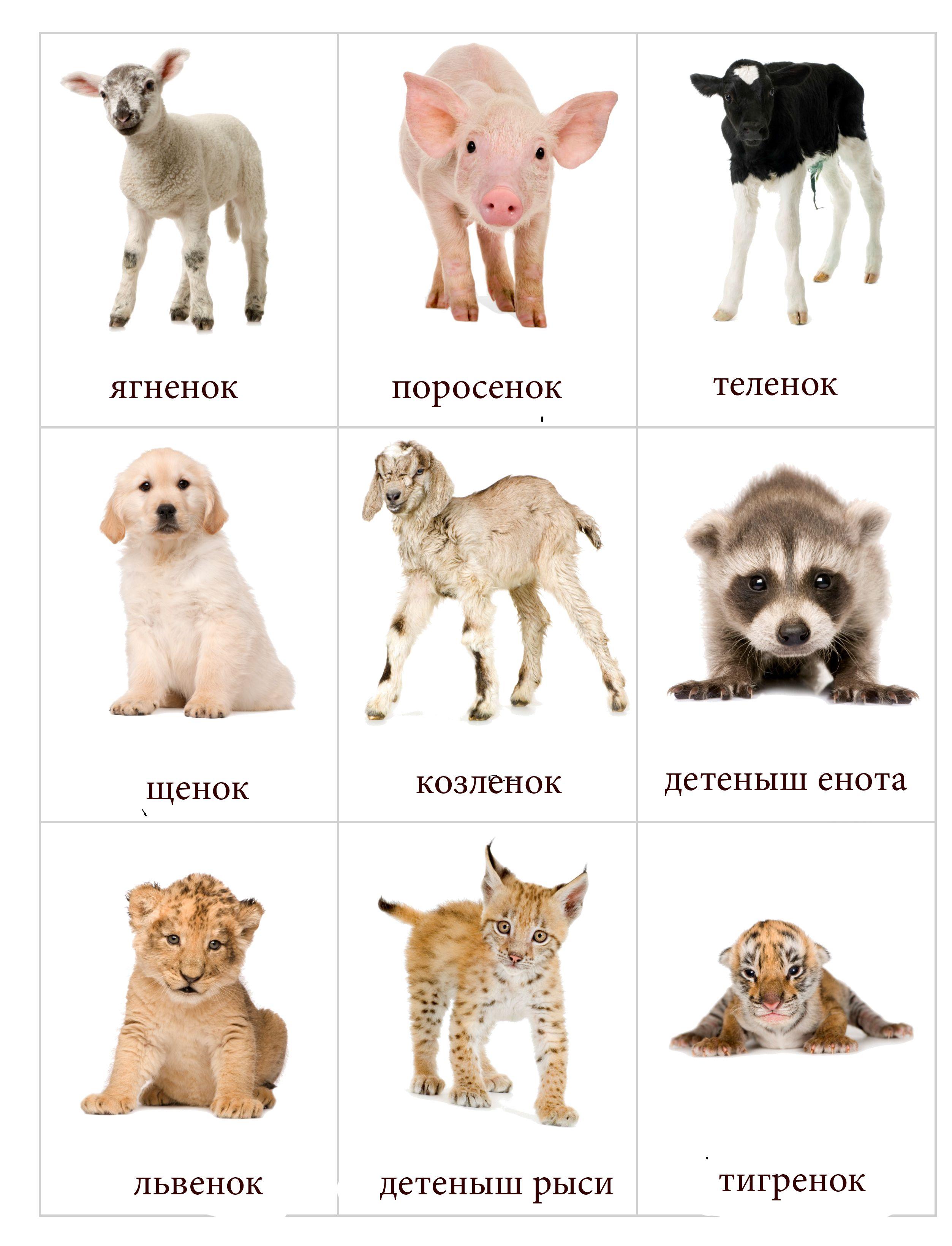 знакомство с домашние животными и детенышами